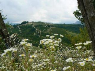 Fietsvakantie Emilia Deluxe Noord Italië