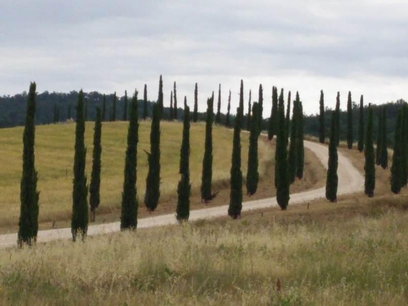 Fietsvakantie Toscane voor wielrenners